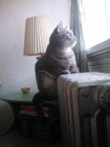 Michi at window