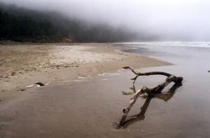 BeachDriftwood2