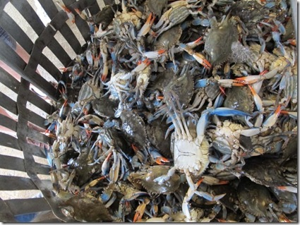 bucket-of-crabs1